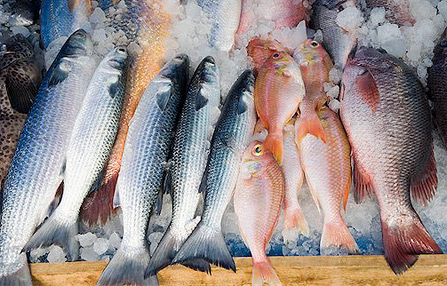 The skinny on fish for Best type of fish to eat