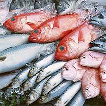 Do you need to worry about mercury in fish for Fish with high mercury content
